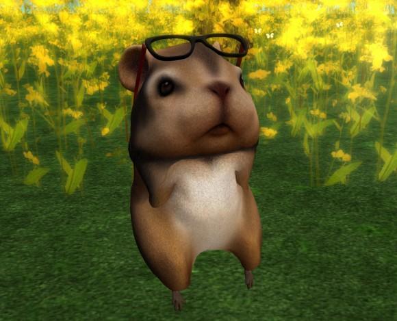 hamster01